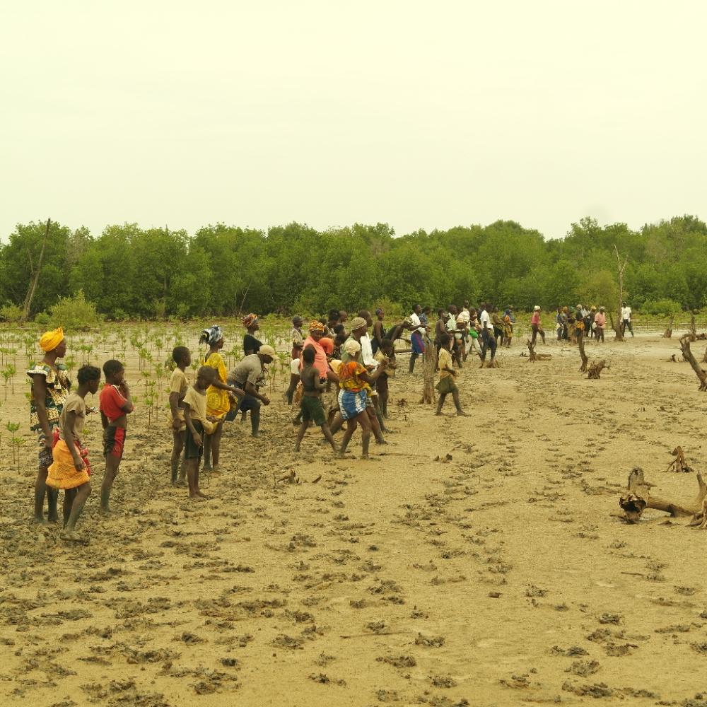 Appraiser on the Environment: The Case of Inner Niger Delta (2/4)